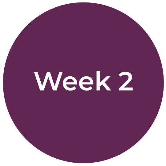 Bootcamp-IC-Week2